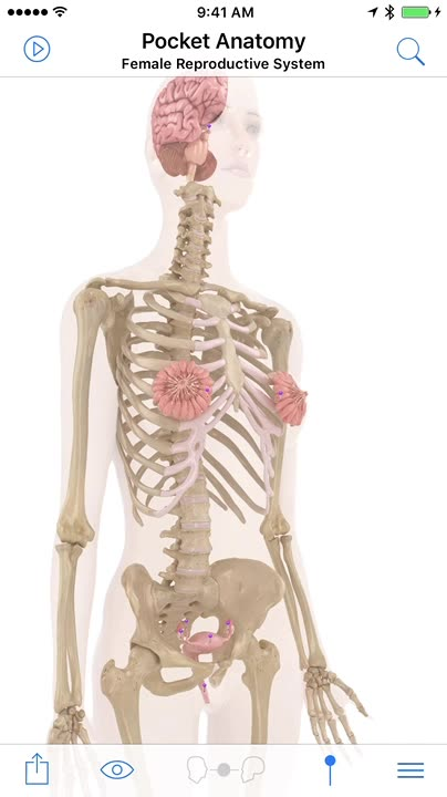 Interactive 3D Human Anatomy and Physiology