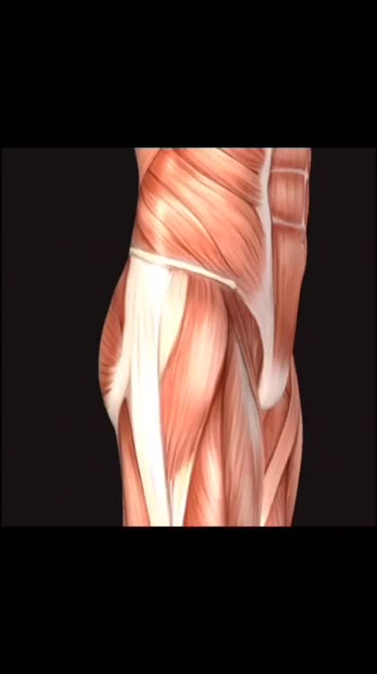 Learn Muscles Anatomy By Real Bodywork