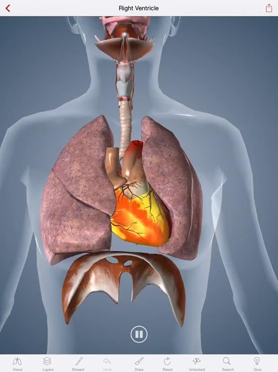 BioDigital 3D Human Anatomy by BioDigital, Inc.