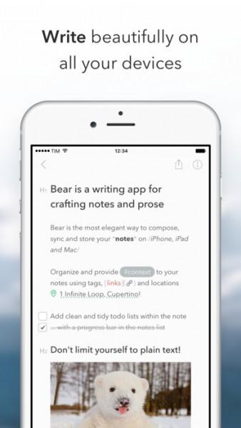 bear-338x600